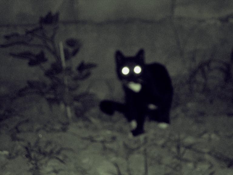 Chuchu, devil cat of East L.A.